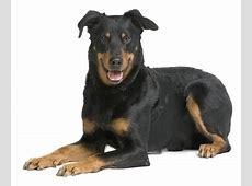 Duden Hund Rechtschreibung, Bedeutung, Definition