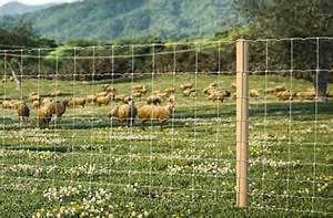 Grillage à Mouton 1m50 : prix sur demande ~ Dailycaller-alerts.com Idées de Décoration