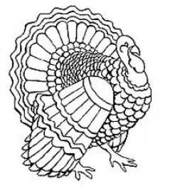 turkey coloring page free large images
