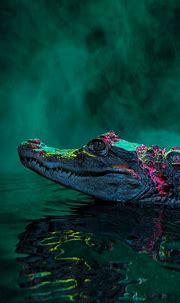 [29+] Alligator Wallpapers on WallpaperSafari