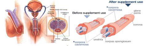 vimax australia best natural penis enlargement pills