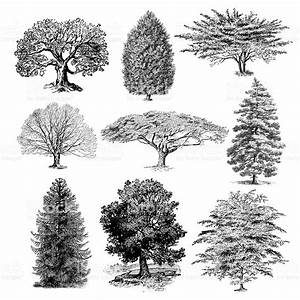 Forest Tree Illustrations Vintage Nature Clipart Stock ...