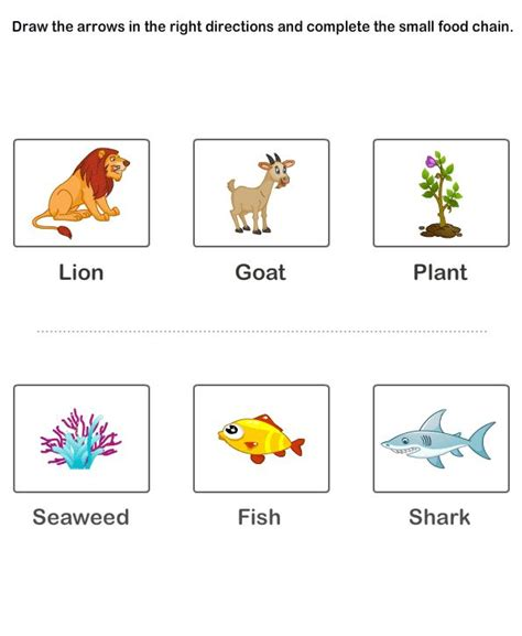 free 2nd grade science worksheets food chain worksheets