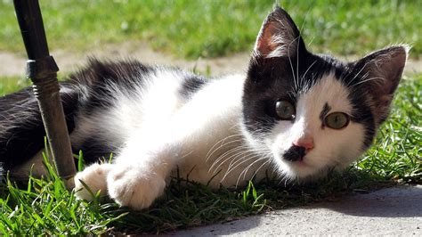 ueber die katzen nur fuer katzenliebhaber schoene bilder blog