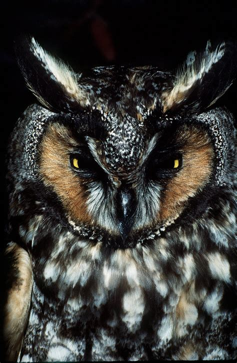 symbiotic relationship  owls woodpeckers helps