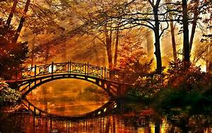 Sunshine, On, Autumn, Forest, Bridge, Hd, Wallpaper