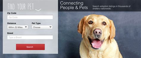 Overstock Com Launches Pet Adoption Website