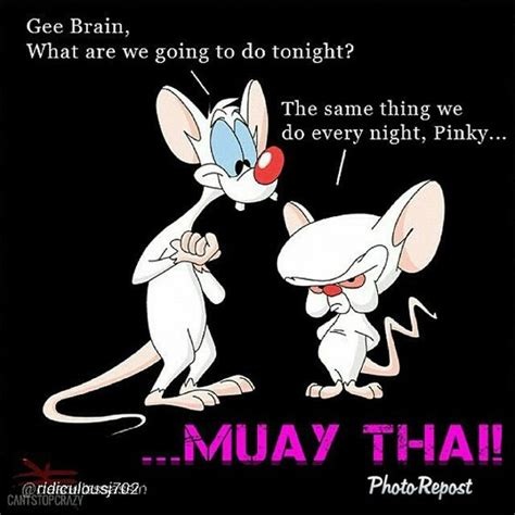 Muay Thai Memes - muay thai memes and comedy martial arts mma fighters humor fail memes mock warriors plus