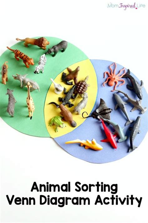 sorting animals venn diagram activity  kids animal