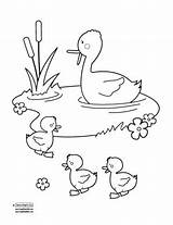 Pond Duck Coloring Pages Drawing Ponds Ducks Clipart Quiet Getdrawings Printable Bee Books Sc Play Wood Print Getcolorings sketch template