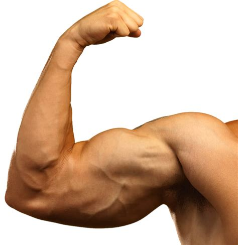 Muscle hand PNG