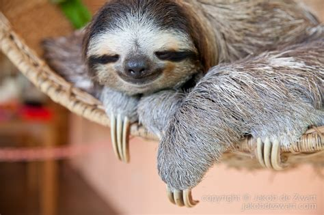 Sloth Images That Sloth