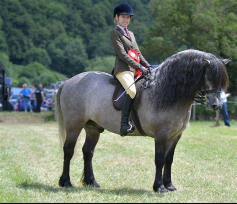 pony moorland breeds mountain ridden junior hoys championship isobel class lines horse slideshow