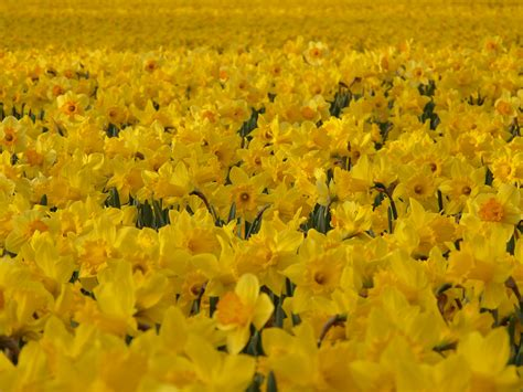 Meadow, Flower, Spring, Colorful, Yellow