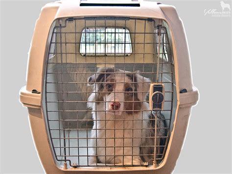 stresssymptome bei hunden welpen yellowstone