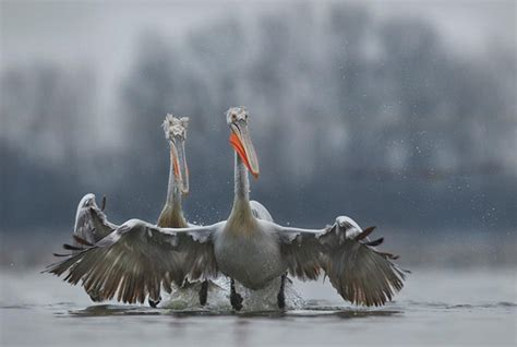 40 Excellent Pictures Of Animals In Rain