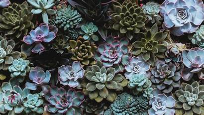 Succulents Plant Background Domestic 1080p Hdtv Fhd