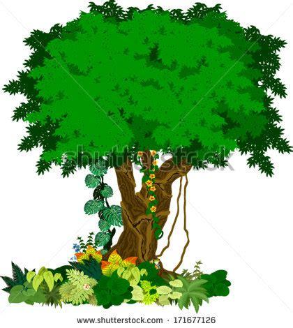 Rainforest Clipart Rainforest Trees Clipart