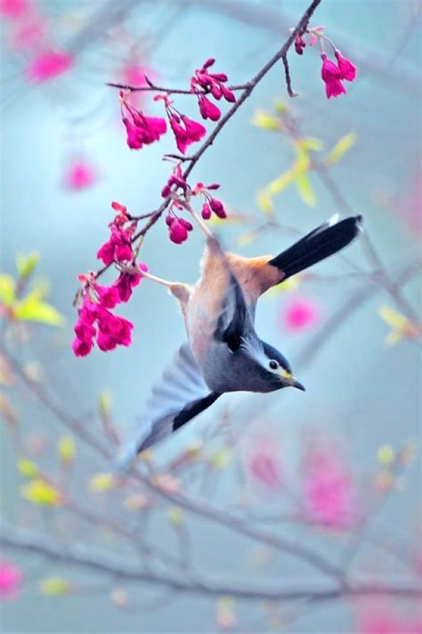 ✓ free for commercial use ✓ high quality images. bird, flowers, art, backgrounds, iphone, smart phone, htc, android | Bird photography, Pretty ...