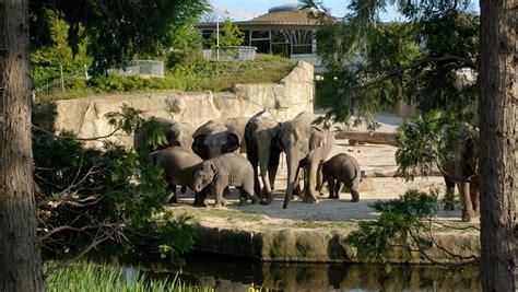 groupon kölner zoo zoo k 246 ln gutschein tickets zum sparpreis mit 44 rabatt