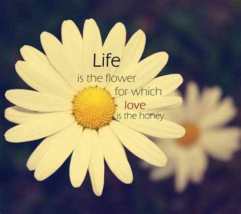 Love Flower Quotes Awesome Love Quotes For Flowers  Quotes About Red Flowers Quotesgram
