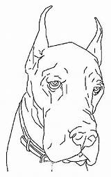 Coloring Dogs Dane Colouring Dog Adult Danes Drawings Printable Animal Drawing Sheets Animals sketch template