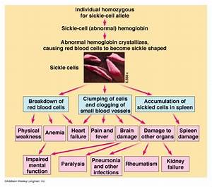 Doctors Gates  Diagram For Effects Of Sickle Cell Anemia