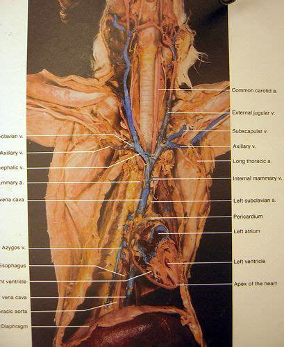 cat dissection flickr photo sharing schoolll
