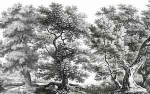 Planisphère Noir Et Blanc : papier peint panoramique ananb sous bois noir et blanc ~ Melissatoandfro.com Idées de Décoration
