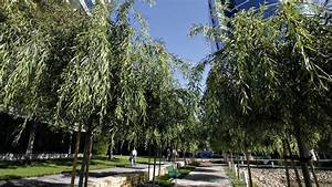 Want A Tree Outside Your Albuquerque Office Window  Here U0026 39 S