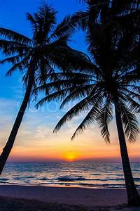 Beautiful tropical sunset with palm trees. Tropical beach ...