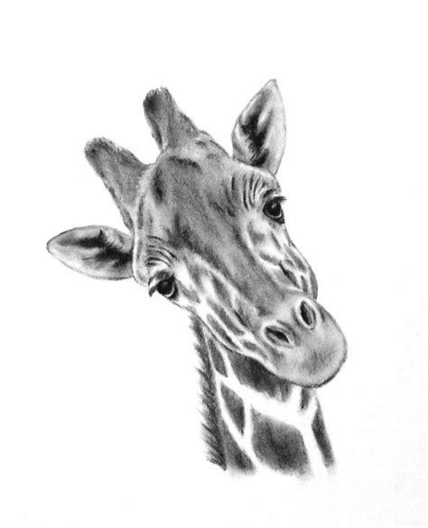 original charcoal giraffe drawing  giraffe art