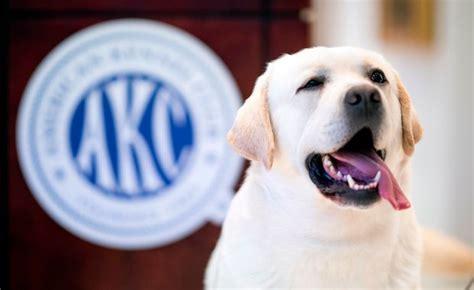 สุนัขพันธุ์อะไรที่คนนิยมเลี้ยงมากที่สุดแห่งปี   Dogilike.com
