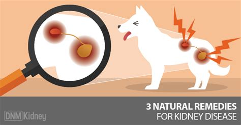 kidney disease  natural treatments   dogs