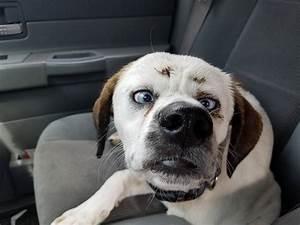Cross-Eyed Dog Found Wandering in my Hometown : aww