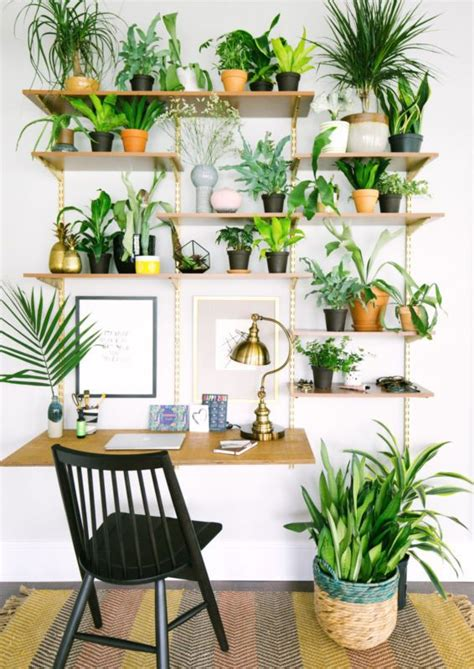 Decorating Ideas For Kitchen Plant Shelves by 25 Best Ideas About Plant Wall On Landscape