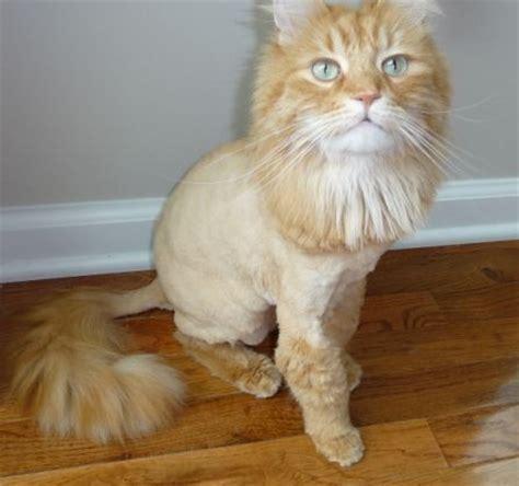 cat grooming images  pinterest cat grooming