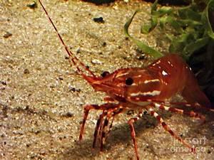 Live Shrimp Pictures