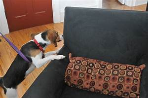 detection dog bed bug dog training dog beds and costumes With bed bug canine