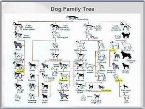 Wolf To Dog Family Tree