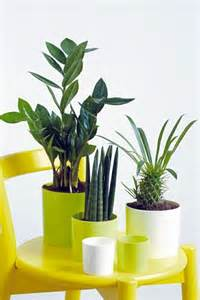 Plants For Bathroom Feng Shui feng shui plants for harmony and positive energy in the