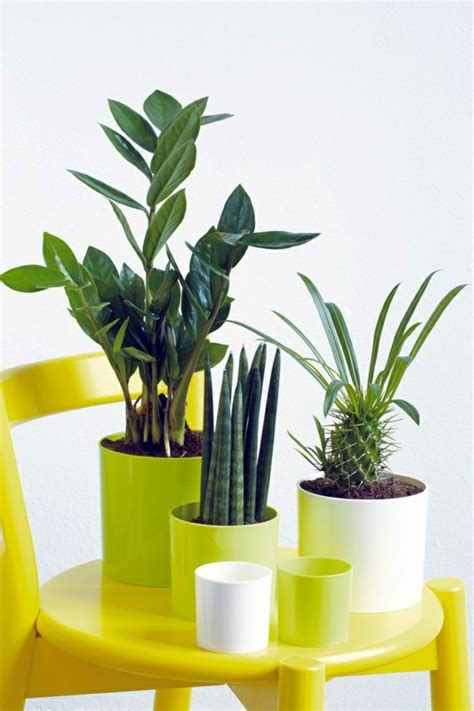 best plants for bathroom feng shui feng shui plants for harmony and positive energy in the