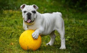 dog    school separation anxiety