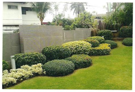 philippines landscape plants landscape plants for sale and other garden needs offered from laguna los ba os adpost com