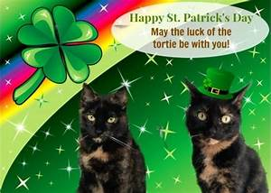 Happy St. Patrick's Day 2015 - The Conscious Cat
