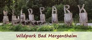 Tierpark Bad Mergentheim : wildpark bad mergentheim wolfsbilder ~ Watch28wear.com Haus und Dekorationen