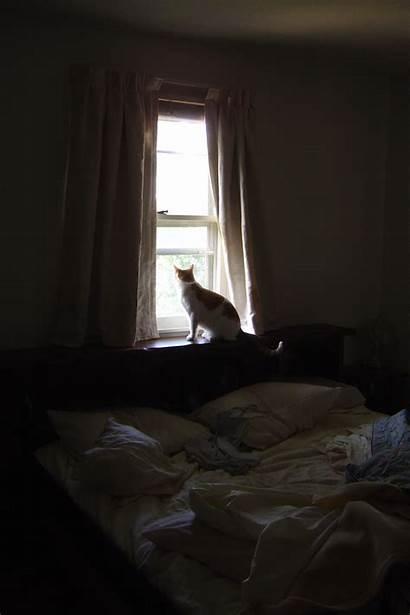 Window Cat Bedroom Looking Through Bed Sunny