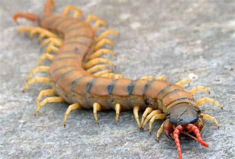 10 Contoh Hewan Invertebrata (Avertebrata) Beserta Gambar ...