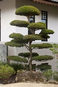 small japanese trees top 28 japanese tree small japanese gardening the magic of japanese gardens www small