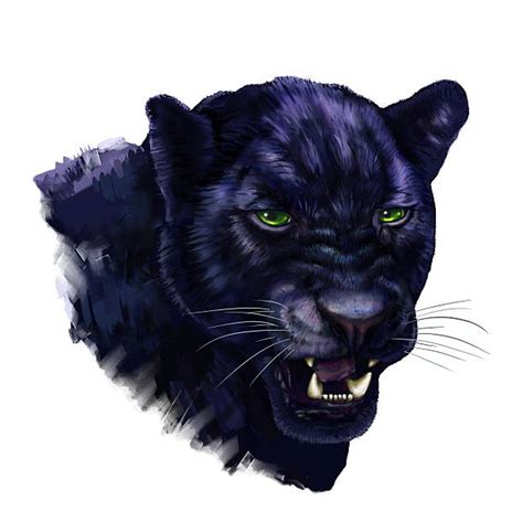 black panther illustrations royalty  vector